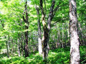 観葉植物レンタルで小さな森づくり